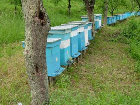 It could be anywhere in Australia, but these beehives are actually in Serbia (see Pictorial Essay inside)