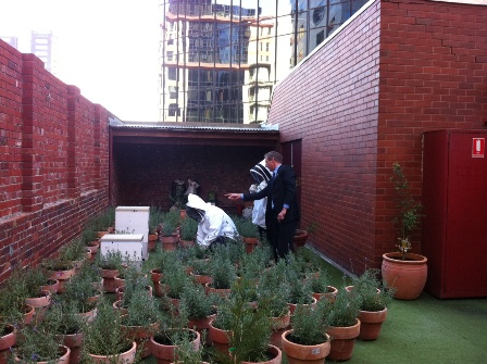 Rooftop Beehives above the Intercontinental Melbourne The Rialto, in the first stages of being established, together with a perennial garden to supply nectar and pollen. (See article inside) Photo: Sarah Sharkey
