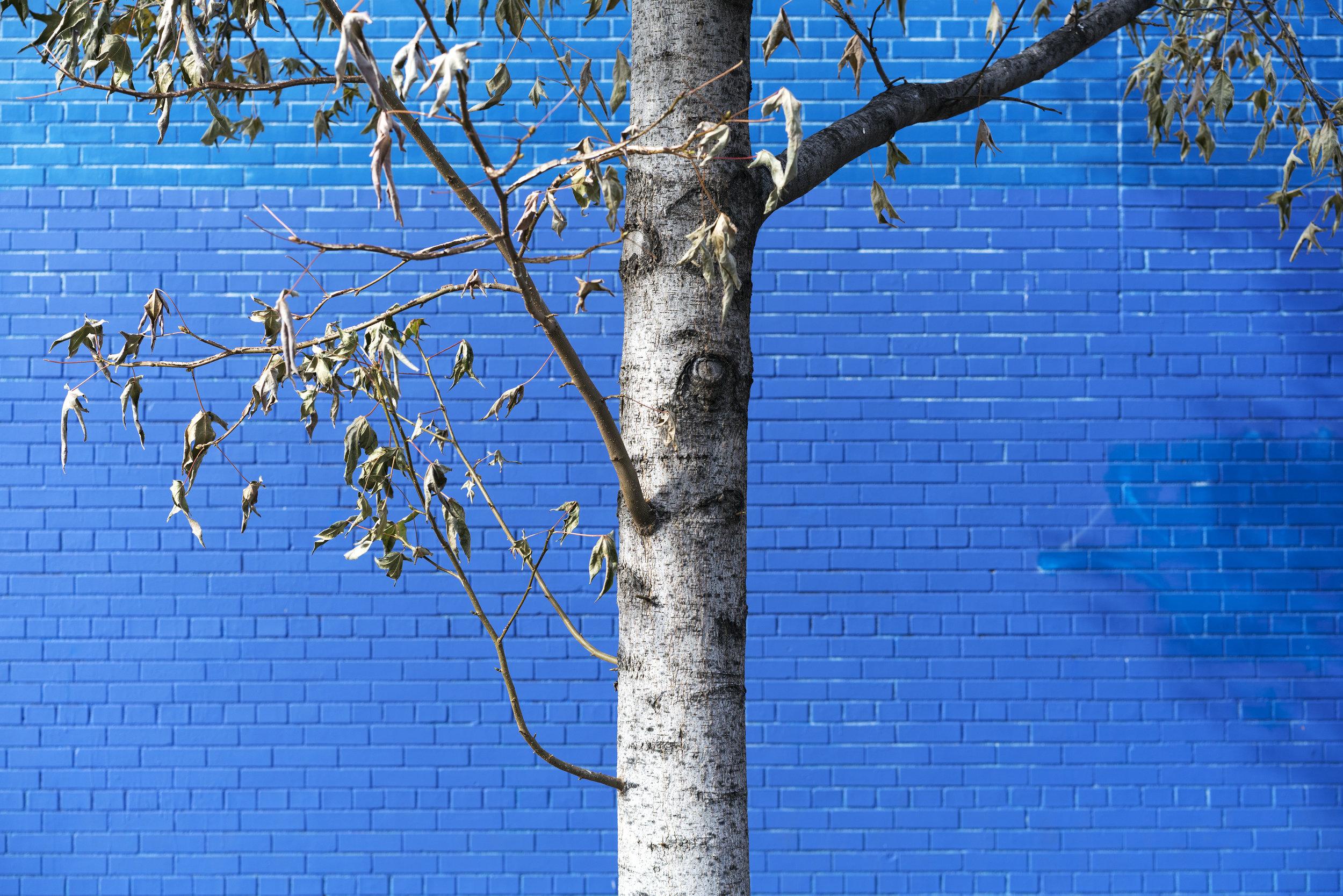bluetreeDSC09611.jpg