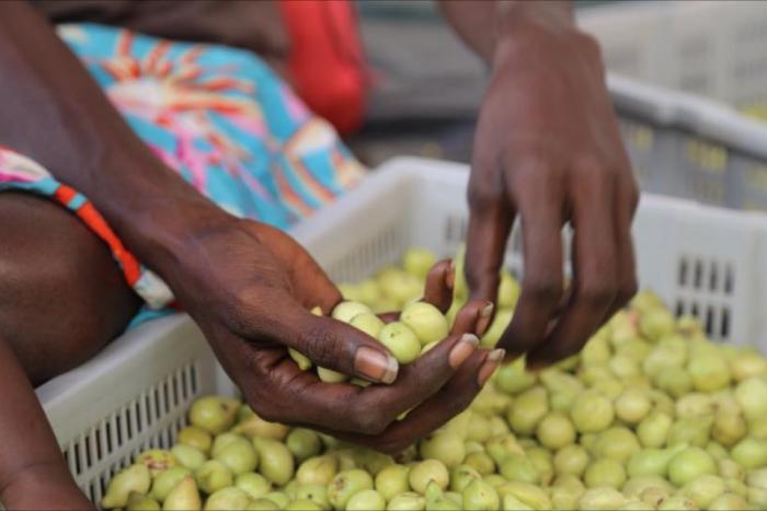 Kakadu Plums - wadeye hands.png