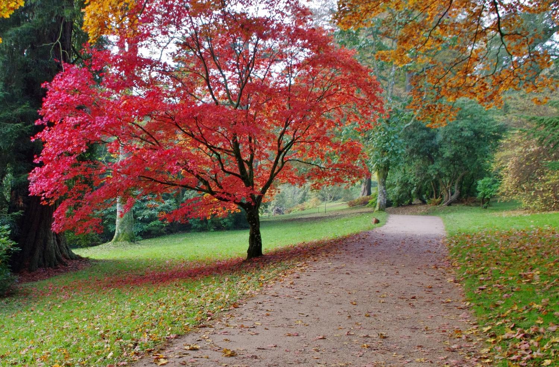 A lovely time for a quiet walk through  Stourhead landscape garden