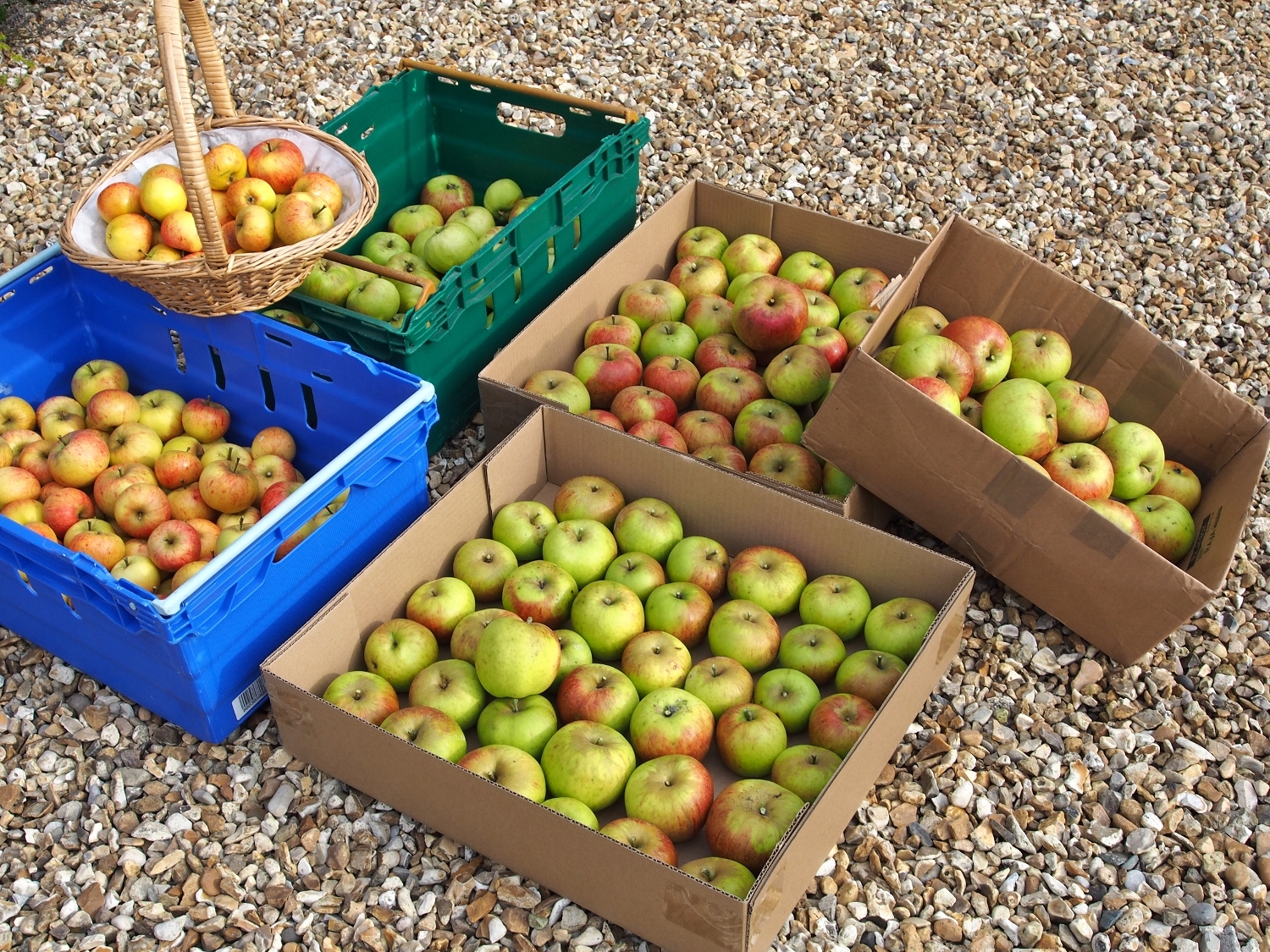 Apples from the garden at Discover England Tours Church House B&B