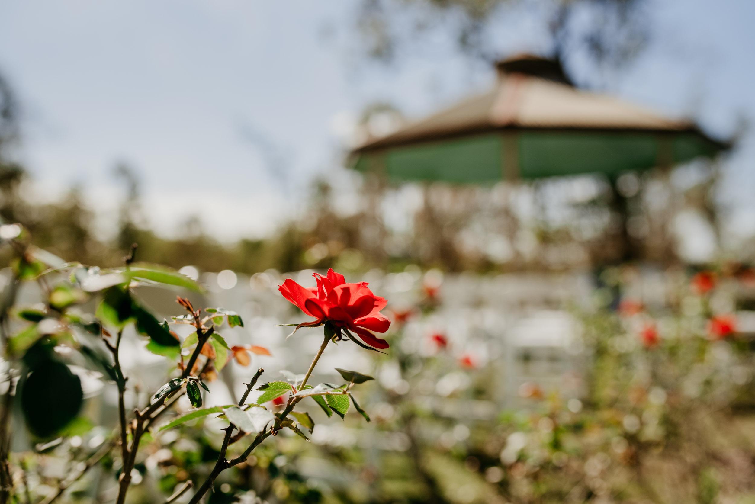The Raw Photographer - Cairns Wedding Photographer - Atherton Tablelands Venue - Mareeba Photography-25.jpg