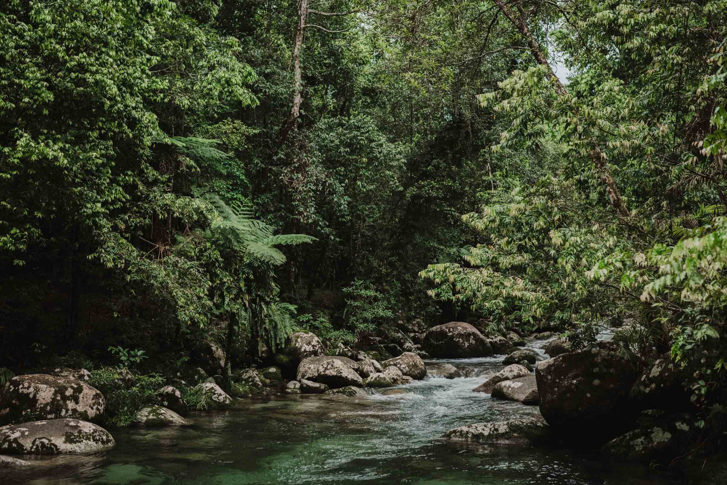 The Raw Photographer - Cairns Wedding Photographer - Rainforest engagement shoot location - Queensland Photography - candid nature-1.jpg