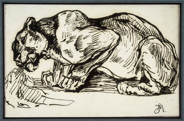 Fig. 1 – Charles Edme Saint-Marcel, Lion, pen and ink, musée Delacroix, Paris.