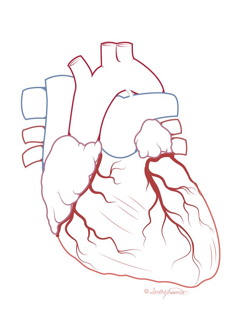 fatunmbi_heart_vector.png