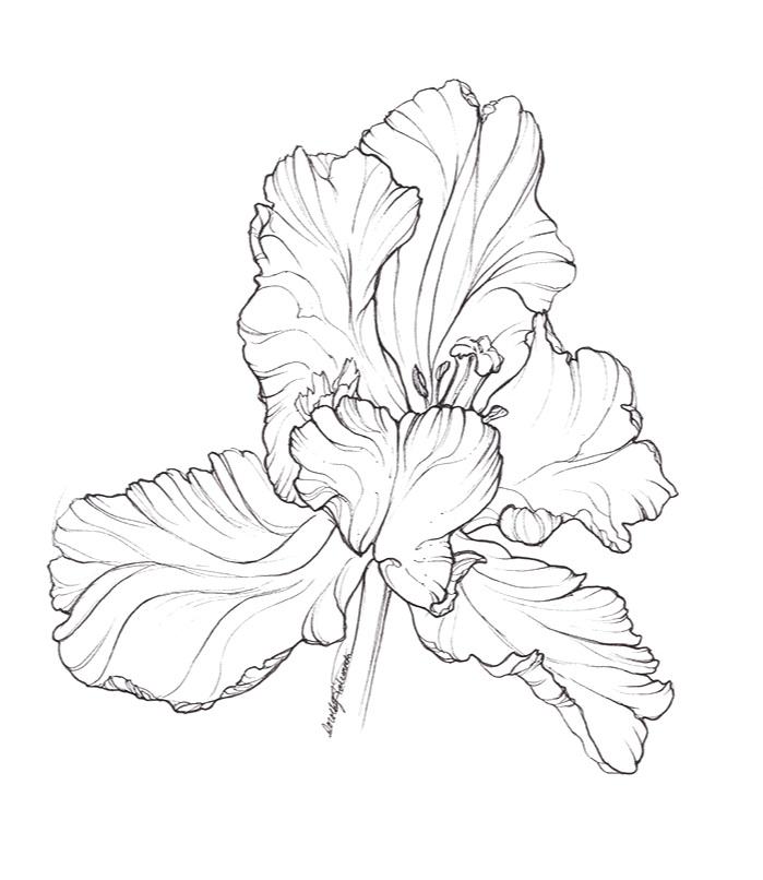 Windswept+Tulip