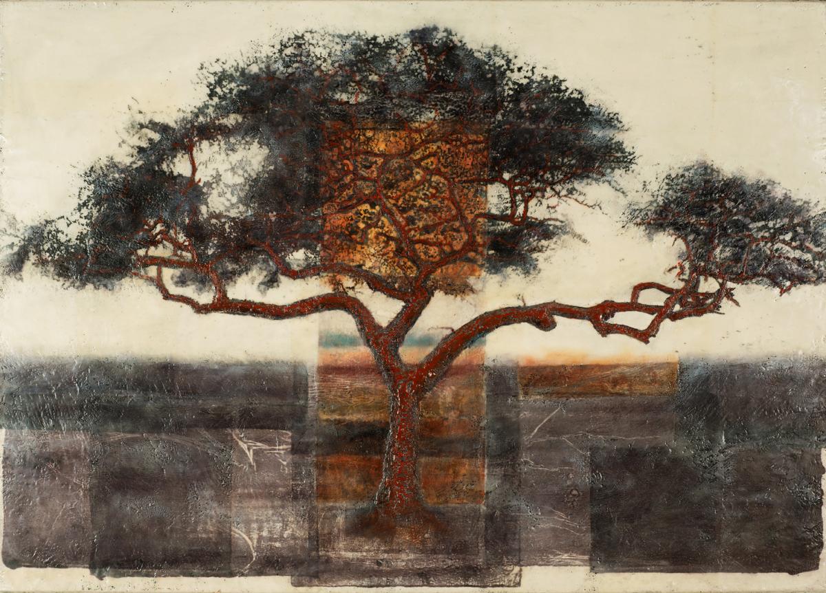Acacia Tortilis (Umbrella Tree - Tazmania)