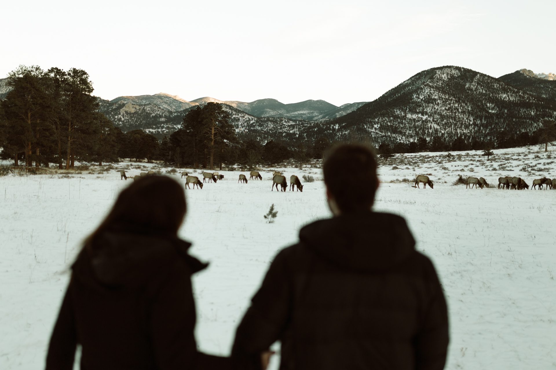 winter-rocky-mountain-national-park-engagements-re-8.jpg