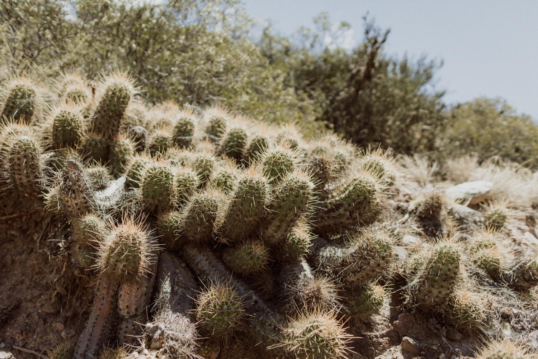 014_cactus_argentina_desert.jpg