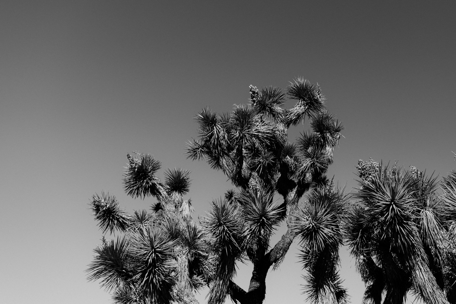 joshua-tree-national-park-elopement-14.jpg