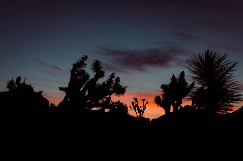 01_tree_sunrise_joshua.jpg