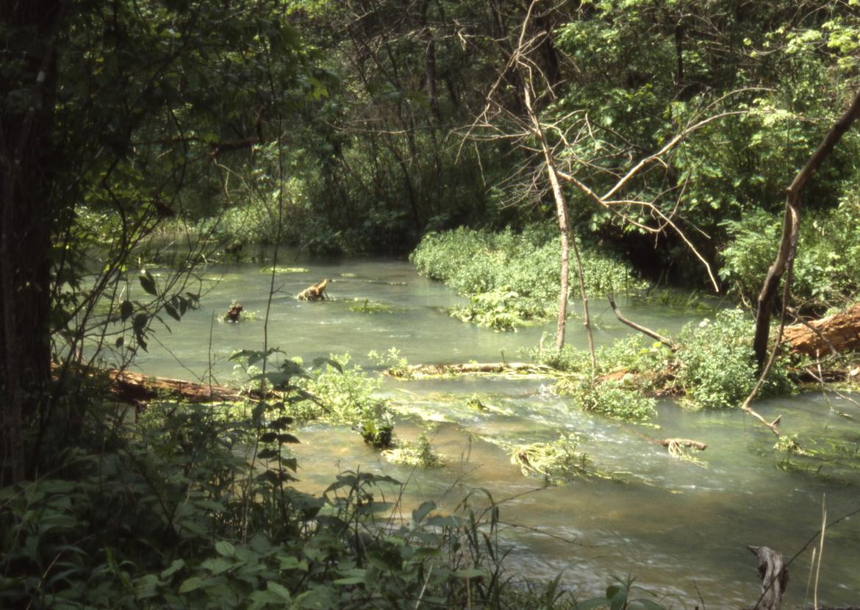 Limestone Stream, central Missouri.