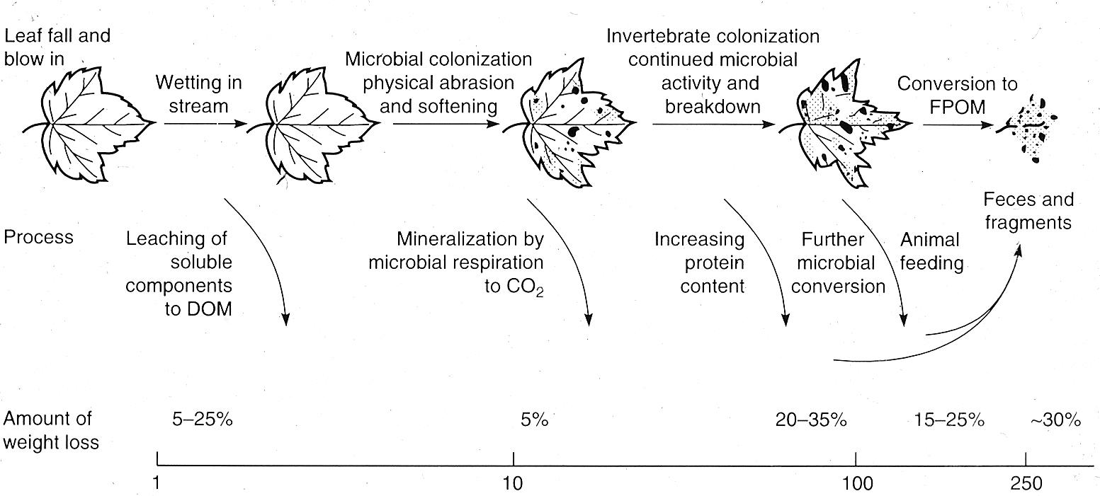 Figure 41.  Stages of leaf degradation.