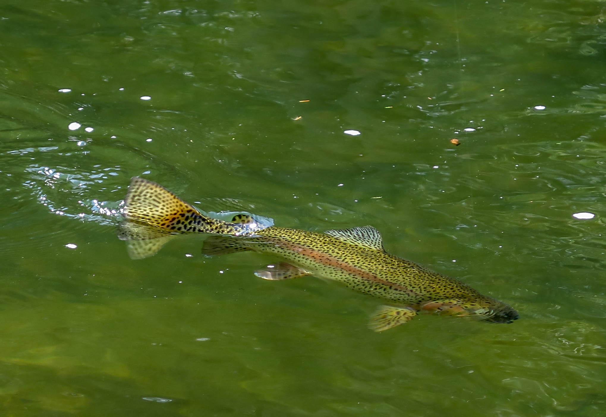 Fish on!-2.jpg