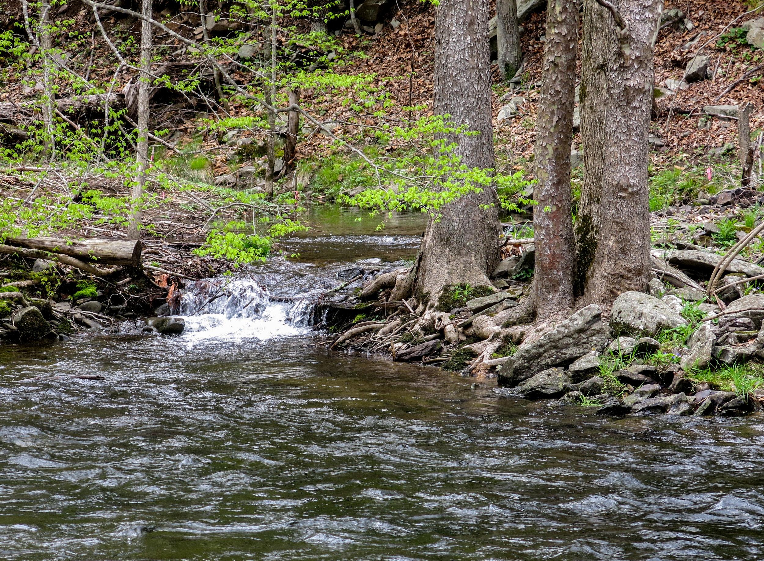 Feeder Stream, Brodhead Creek, Pennsylvania