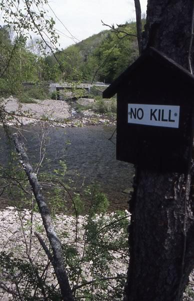 Horton Brook, Feeder Stream to Beaver Kill