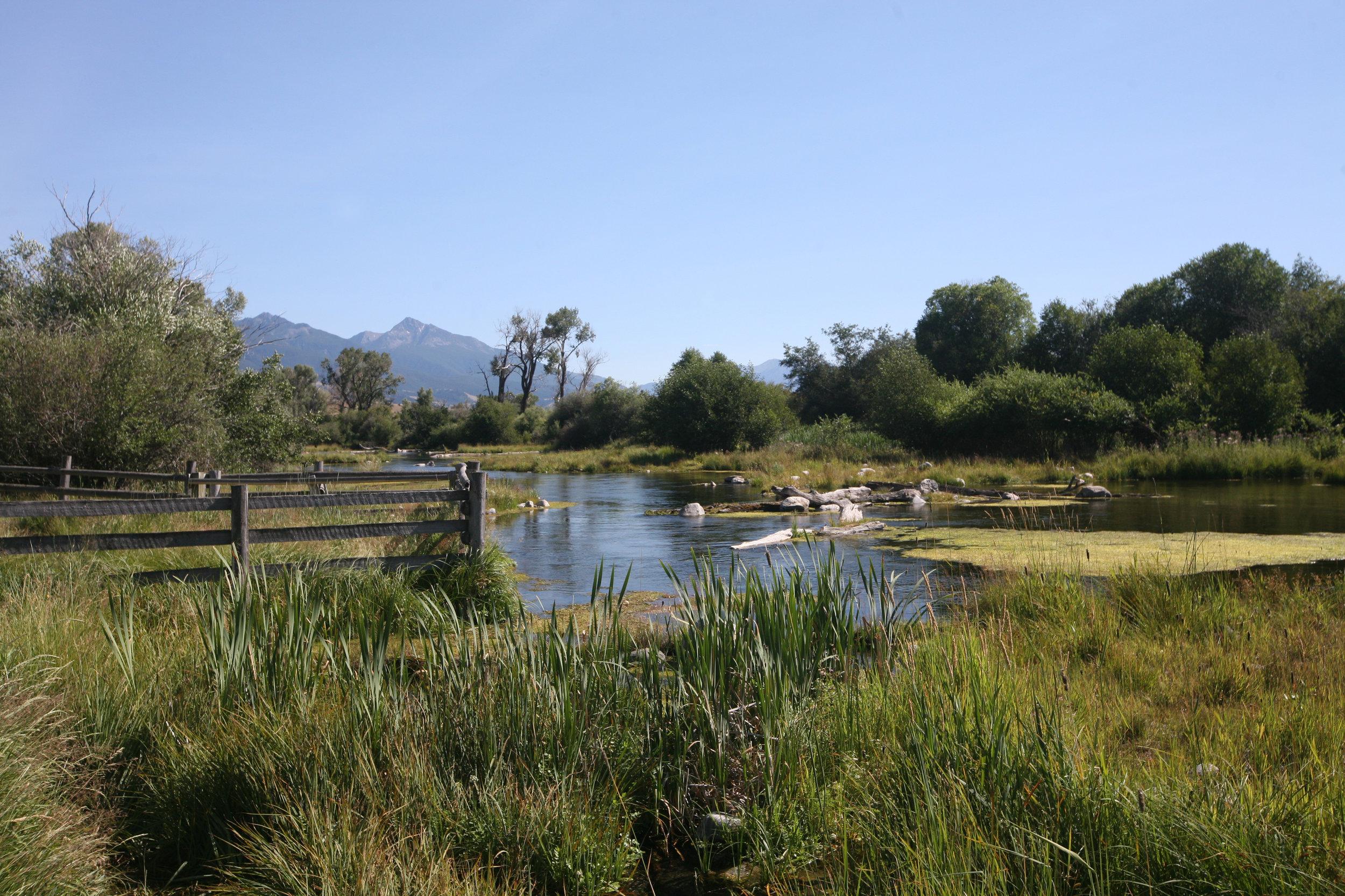 Nelson's Spring Creek, Paradise Valley, Livingston, Montana.