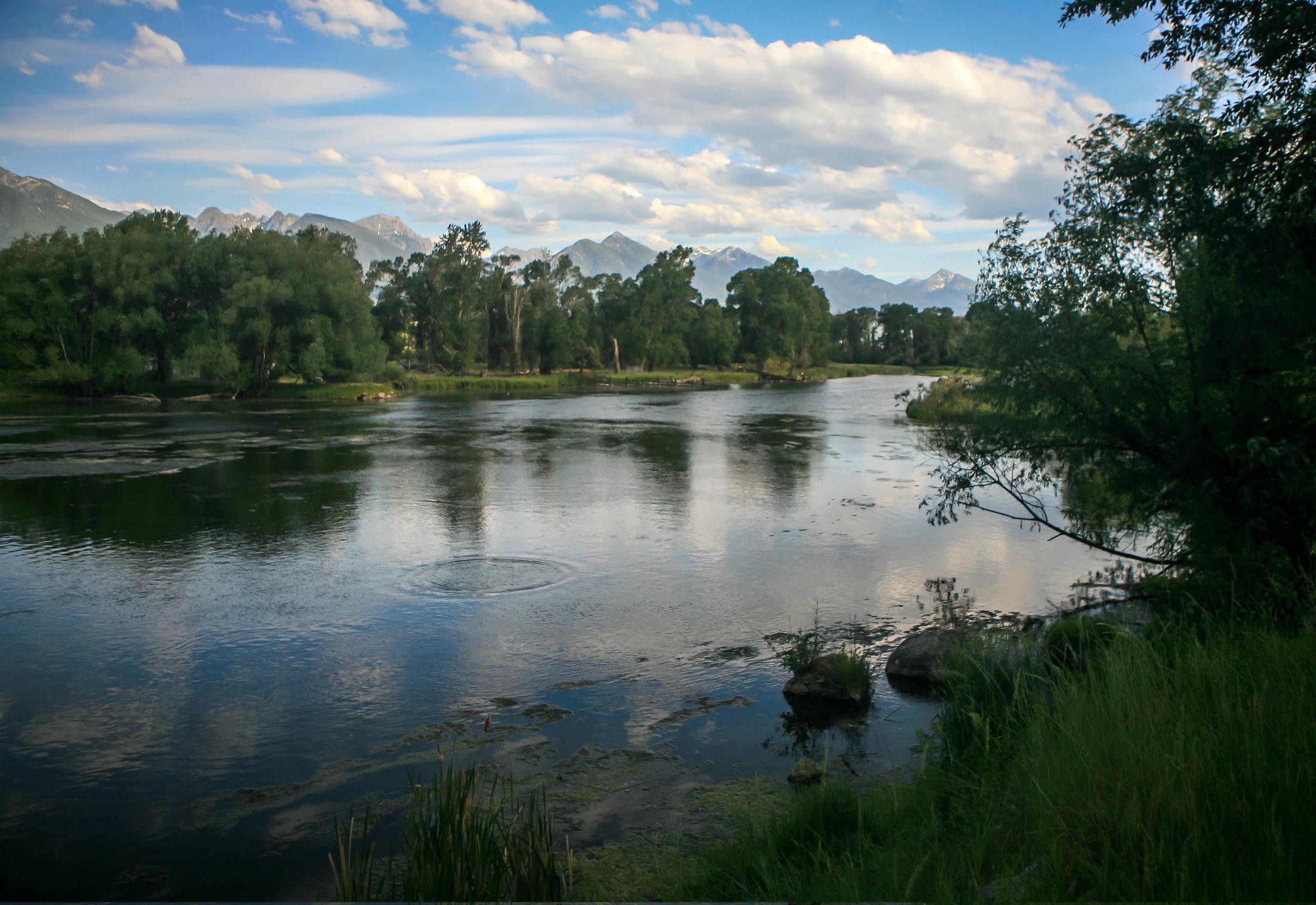 Depuys Spring Creek, Paradise Valley, Livingston, Montana.