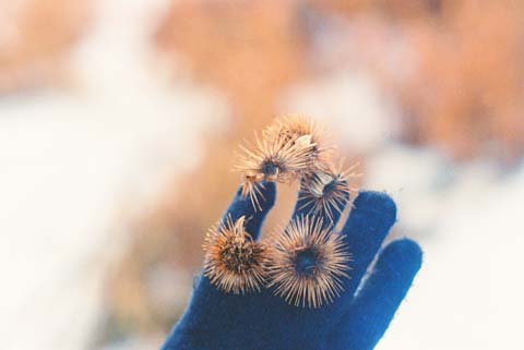 Glove Full of Thistle