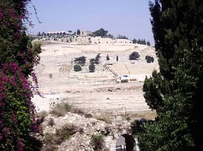 The Temple Mount - even and balanced between 2 trees