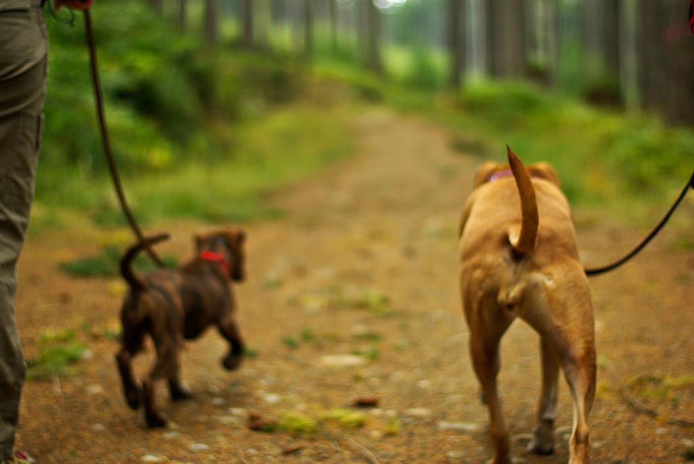Dogs 2.jpg