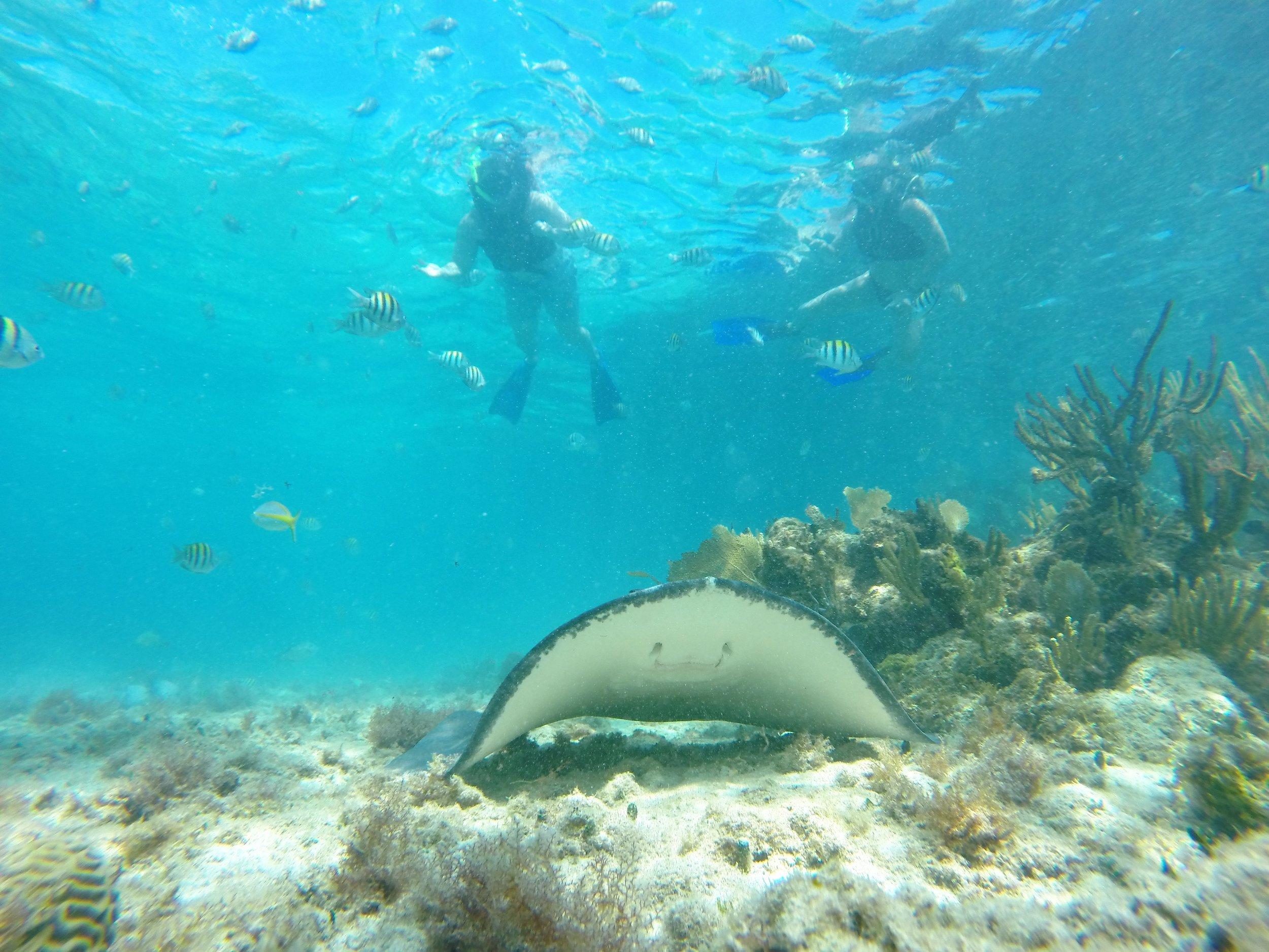 snorkel10.jpg
