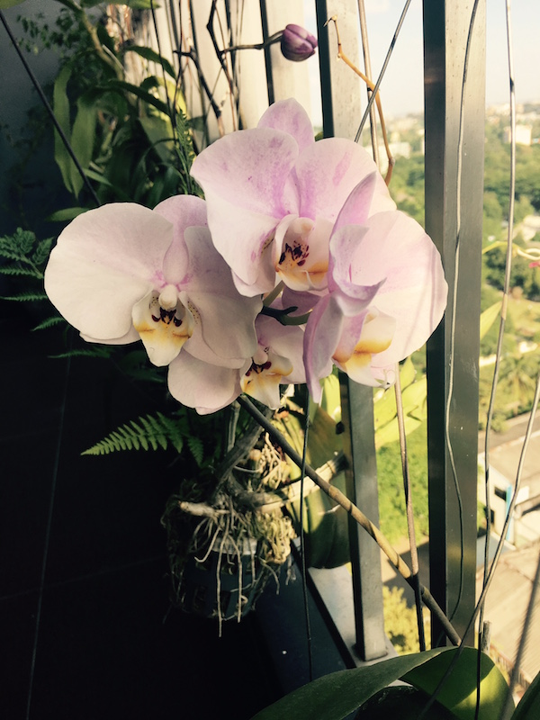 miaruby-new-orchid-collection1.jpg