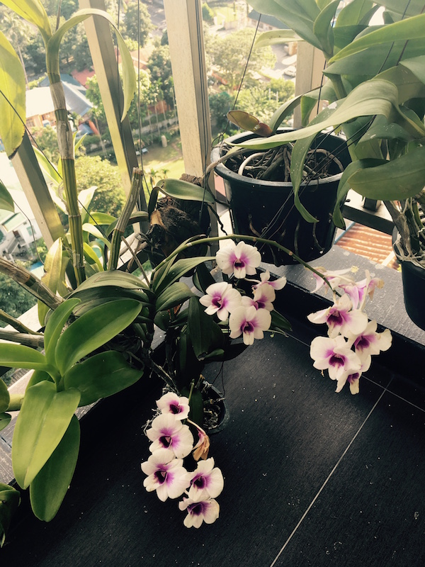 miaruby-new-orchid-collection.jpg