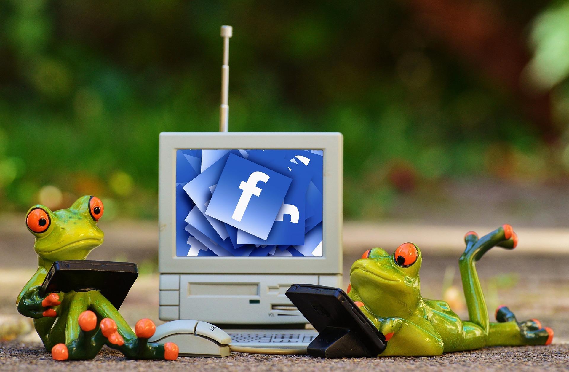 frogs-1037853_1920.jpg
