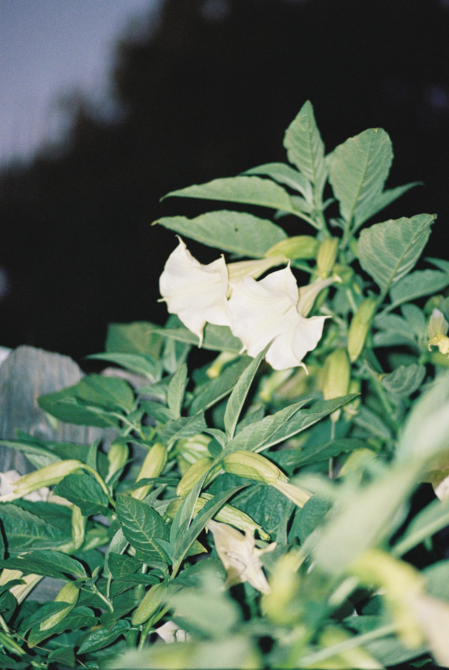 film_california_plants_2019_lind138-001.jpg