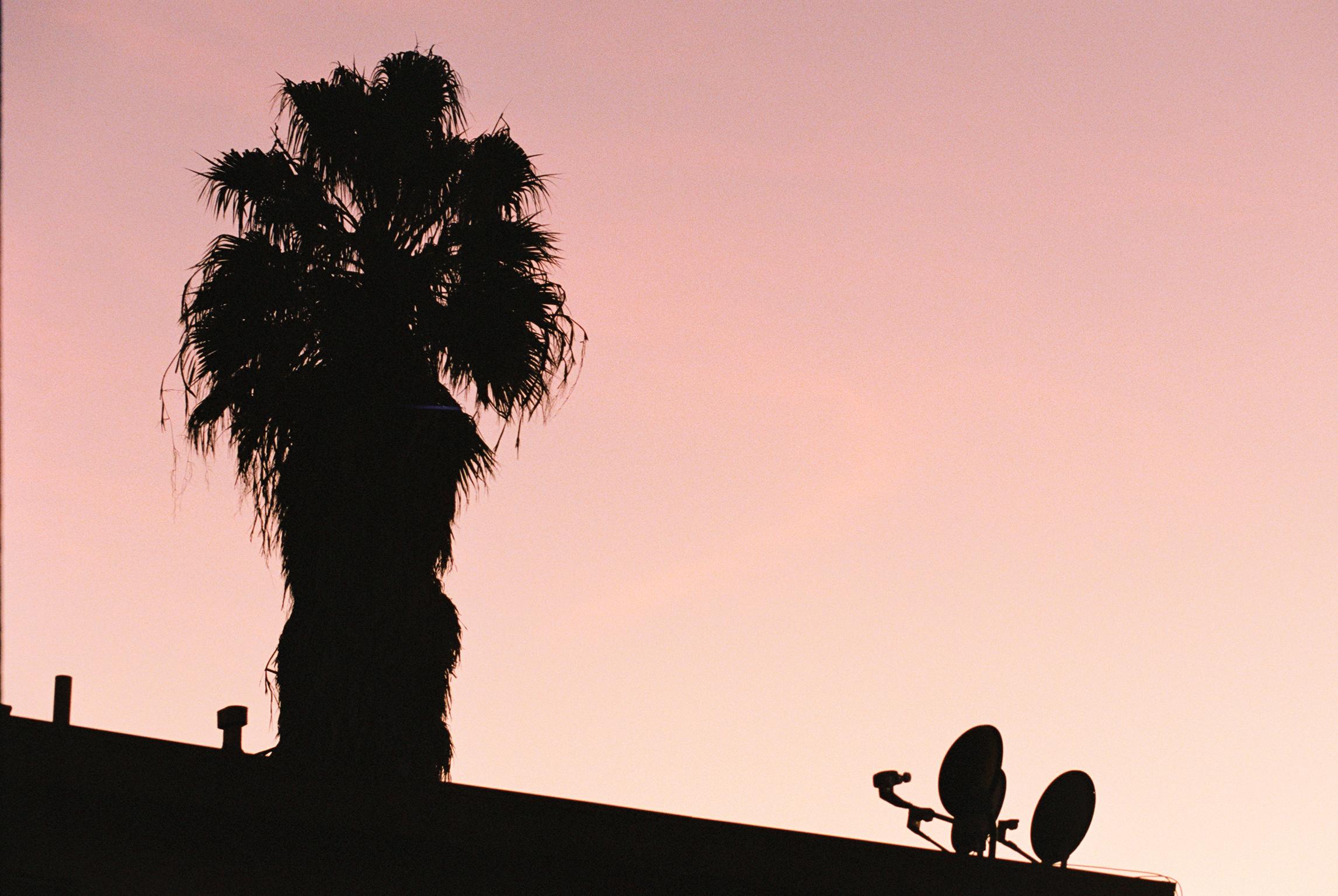film_california_plants_2019_lind138-004.jpg