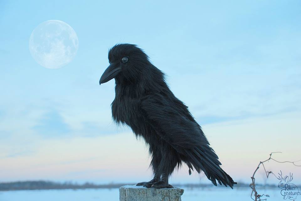 crow moon shot.jpg