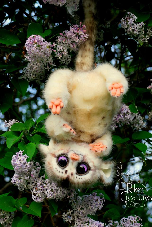 marmacet like creature.jpg
