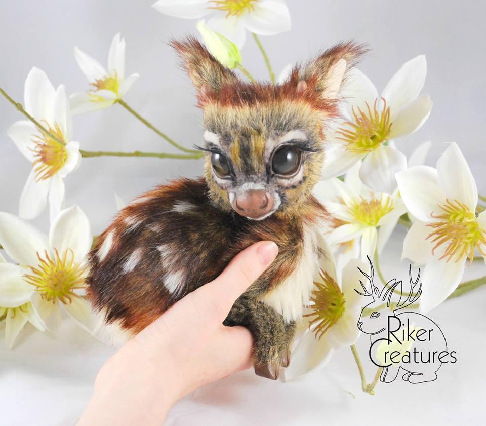 pygmy fawn.jpg