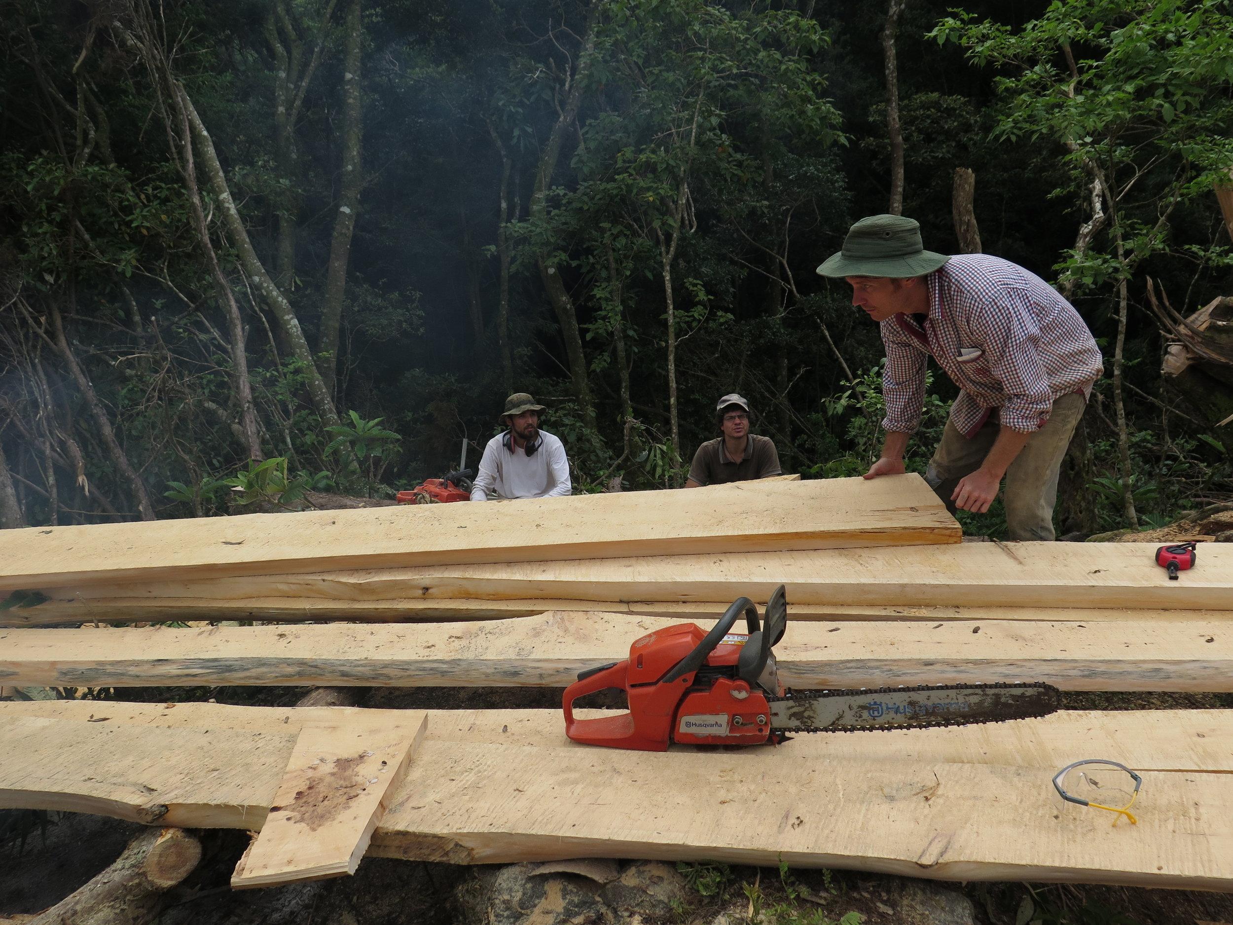 Timber Time