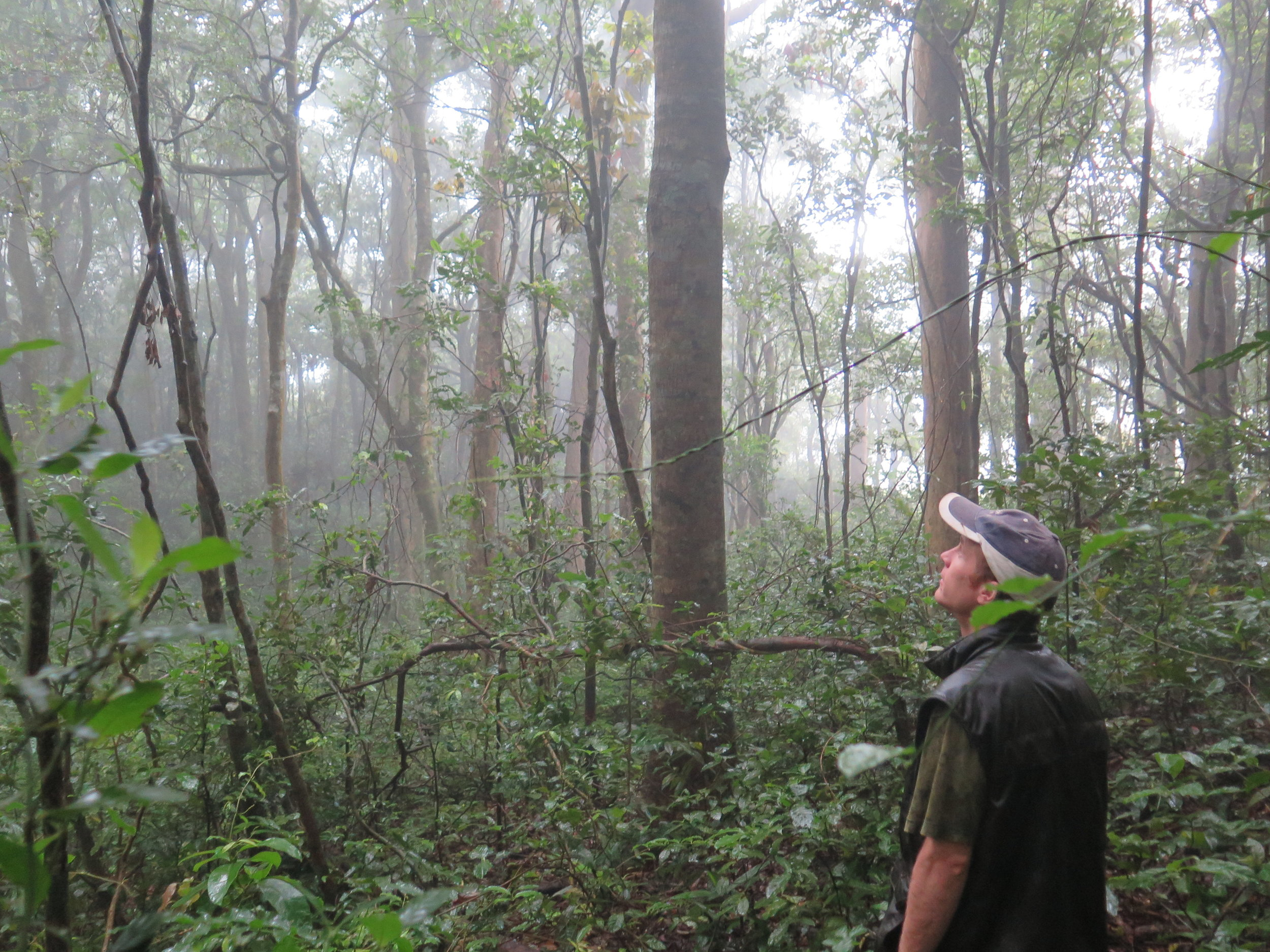 Location: Monteverde Cloud Forest  Seeking naturally wind-fallen hardwoods within the Cloud Forest.