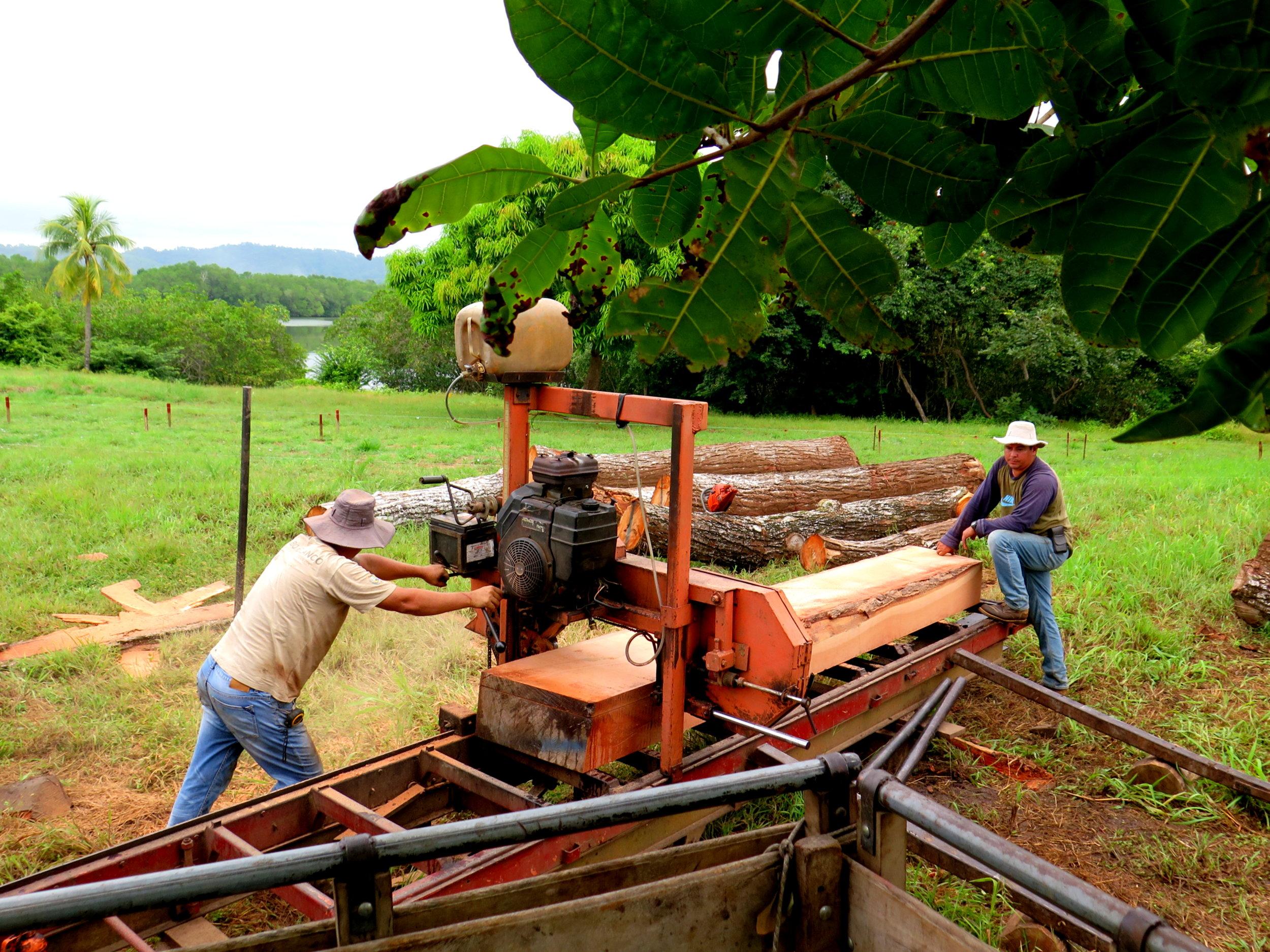 Location: Cocoroca, Punta Morales. Shipyard.  Milling the 'Cedro Amargo' (Spanish Cedar) with the Costa Rican sawyers / lumberjacks.