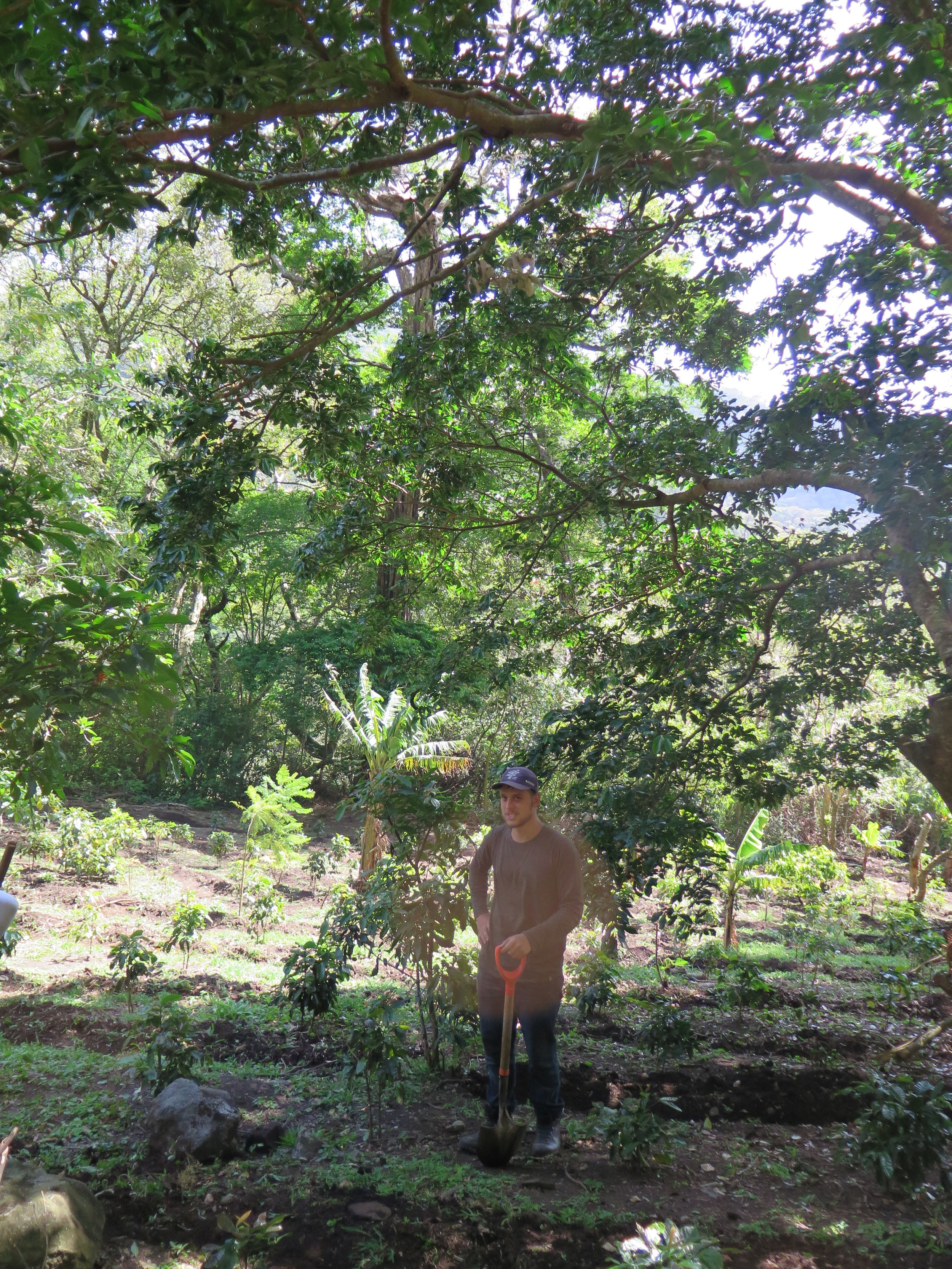 Adriaan working on the Biodynamic Coffee Farm up in the Cloud Forest of San Luis, Monteverde, surrounded by coffee + banana plants.