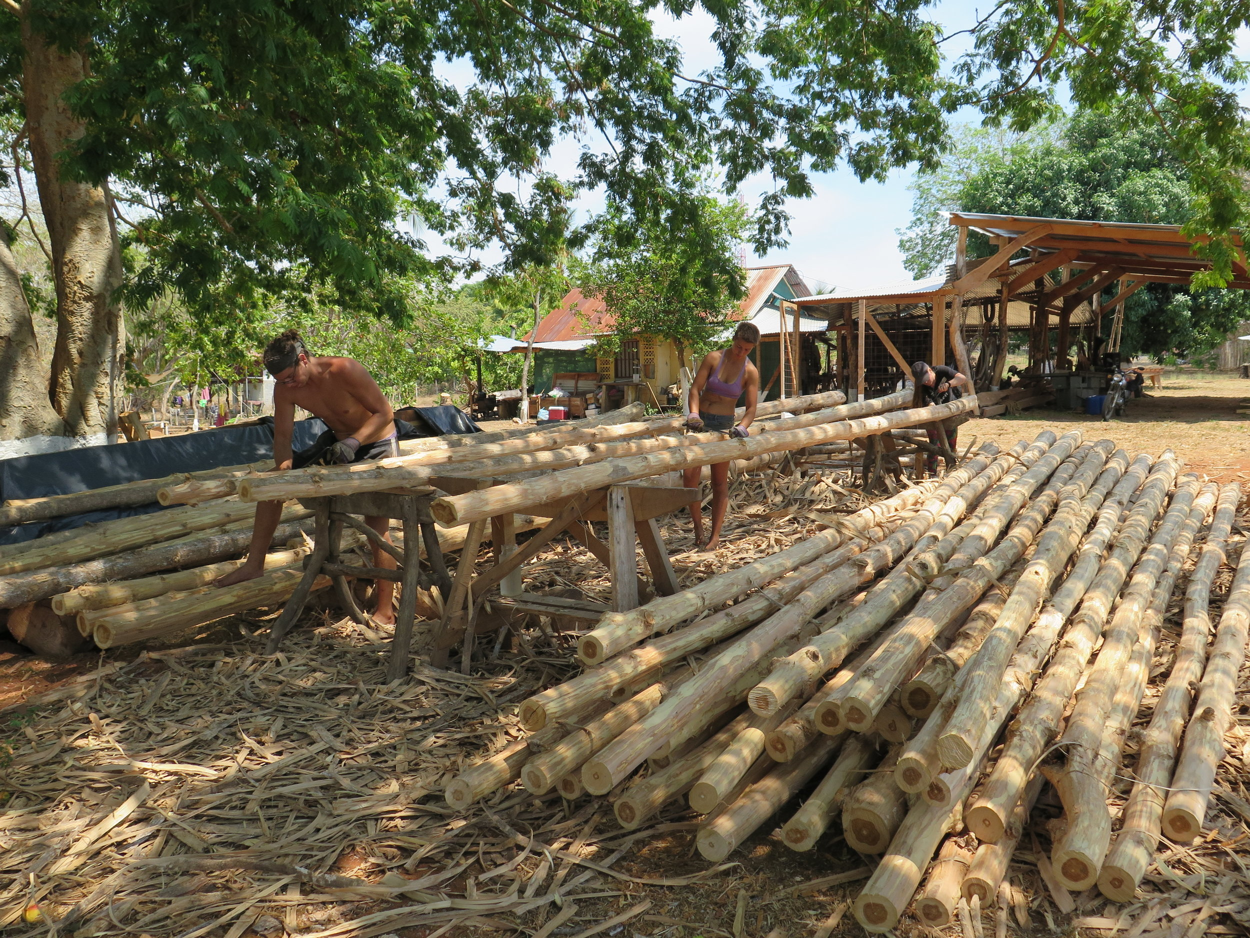 Sailors of TIMBERCOAST's cargo schooner AVONTUUR, Marv + Lilly peel the bark off of plantation teak trees, which will be used to construct the shipbuillding hangar.