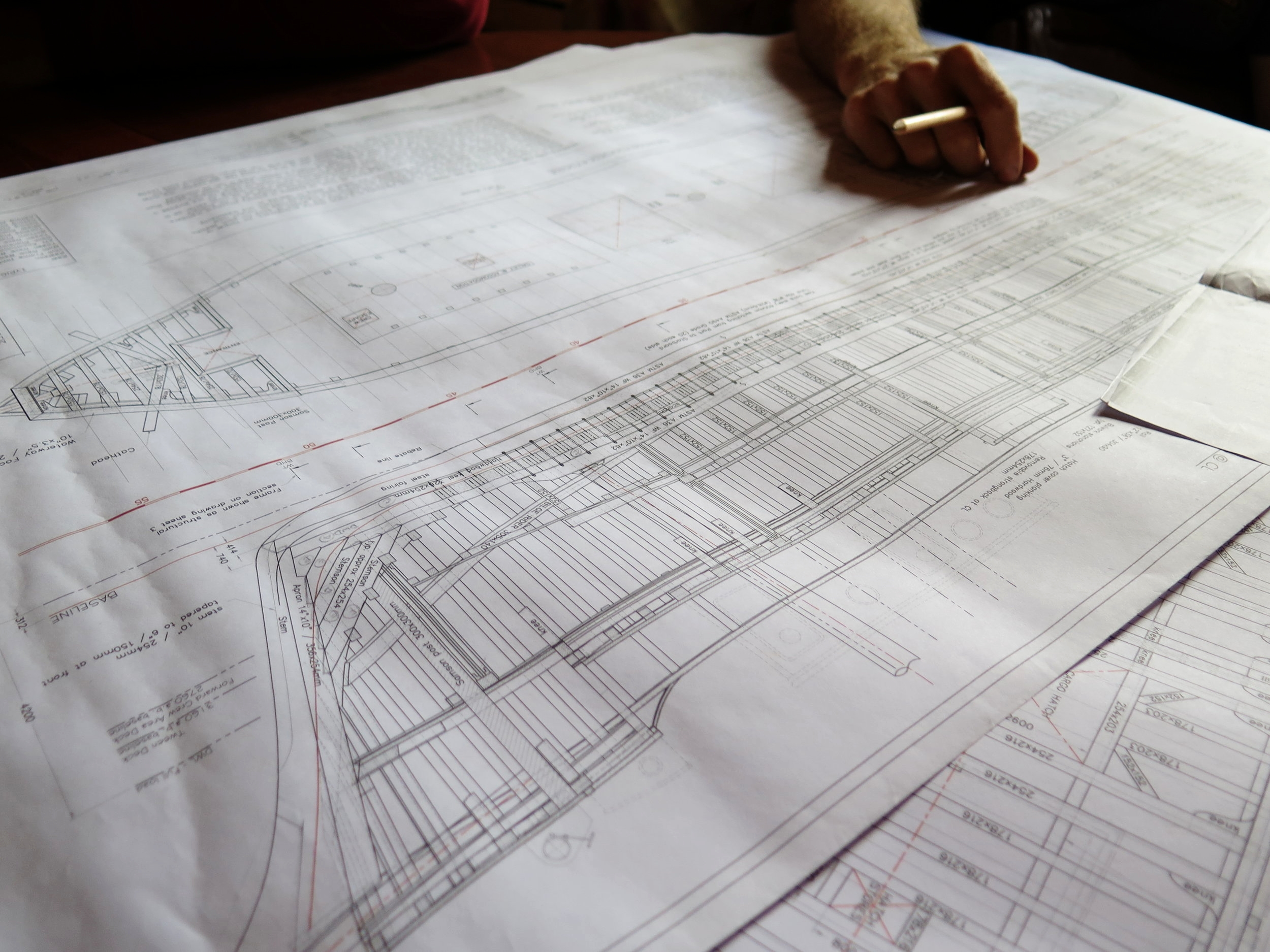 The drawings of  Ceiba , laid out in intricate lines.