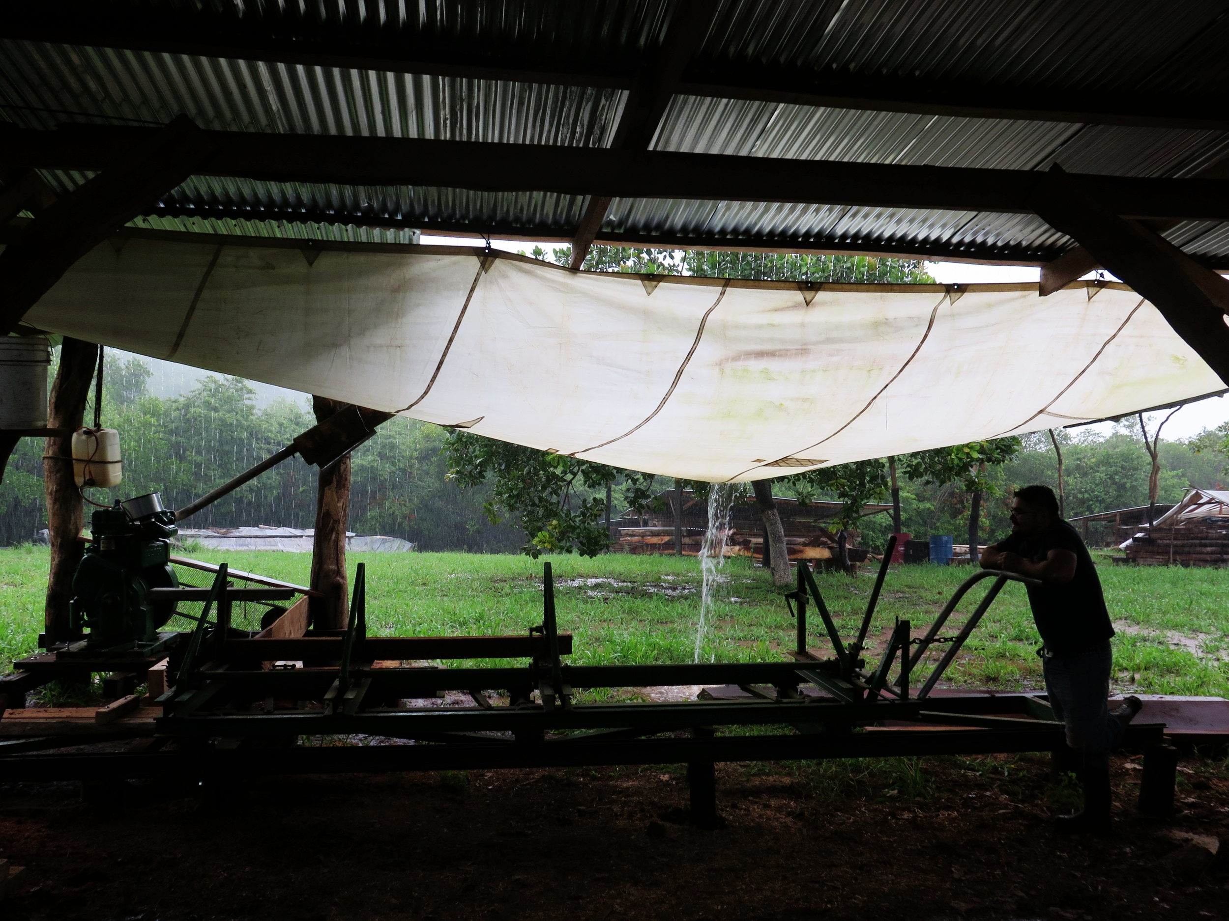 Paolo hanging on the sawmill under a sail of rain.