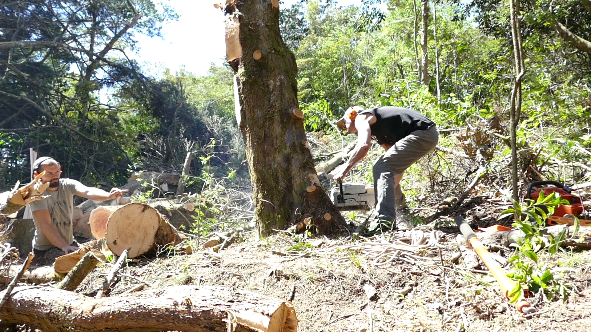 Adrien & JT cutting down large cypress with a STIHL chainsaw. Photo: Finn Richardson
