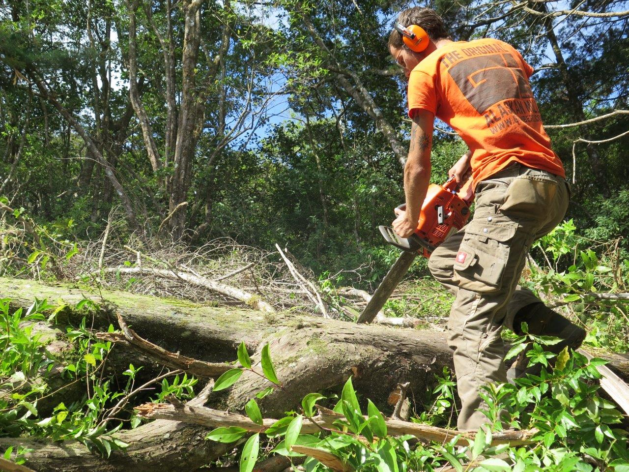 Fredy up in Monteverde, sawing non-native plantation Cypress. This wood is now sawn and used for the framing stage and for plenty more uses at the shipyard.   Photo D. Dog