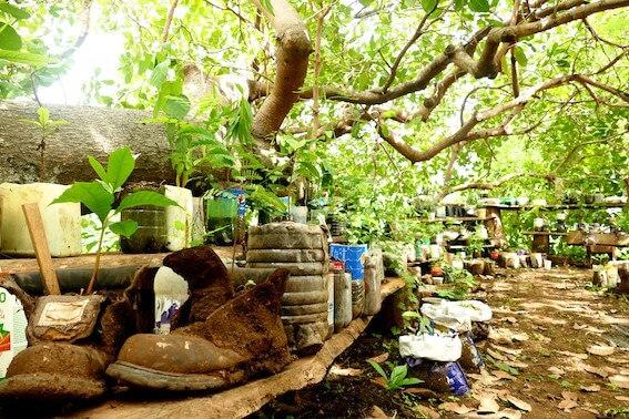 Green Shipyard Treeplanting.jpg