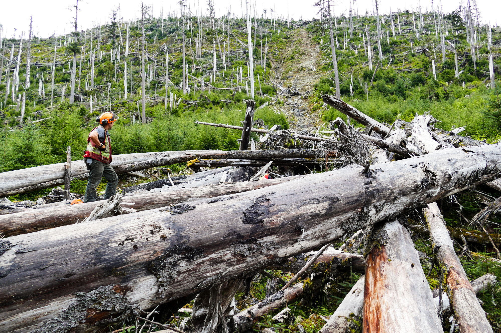North Pacific Timber Corp. director Kris May takes in the scene of a landslide.