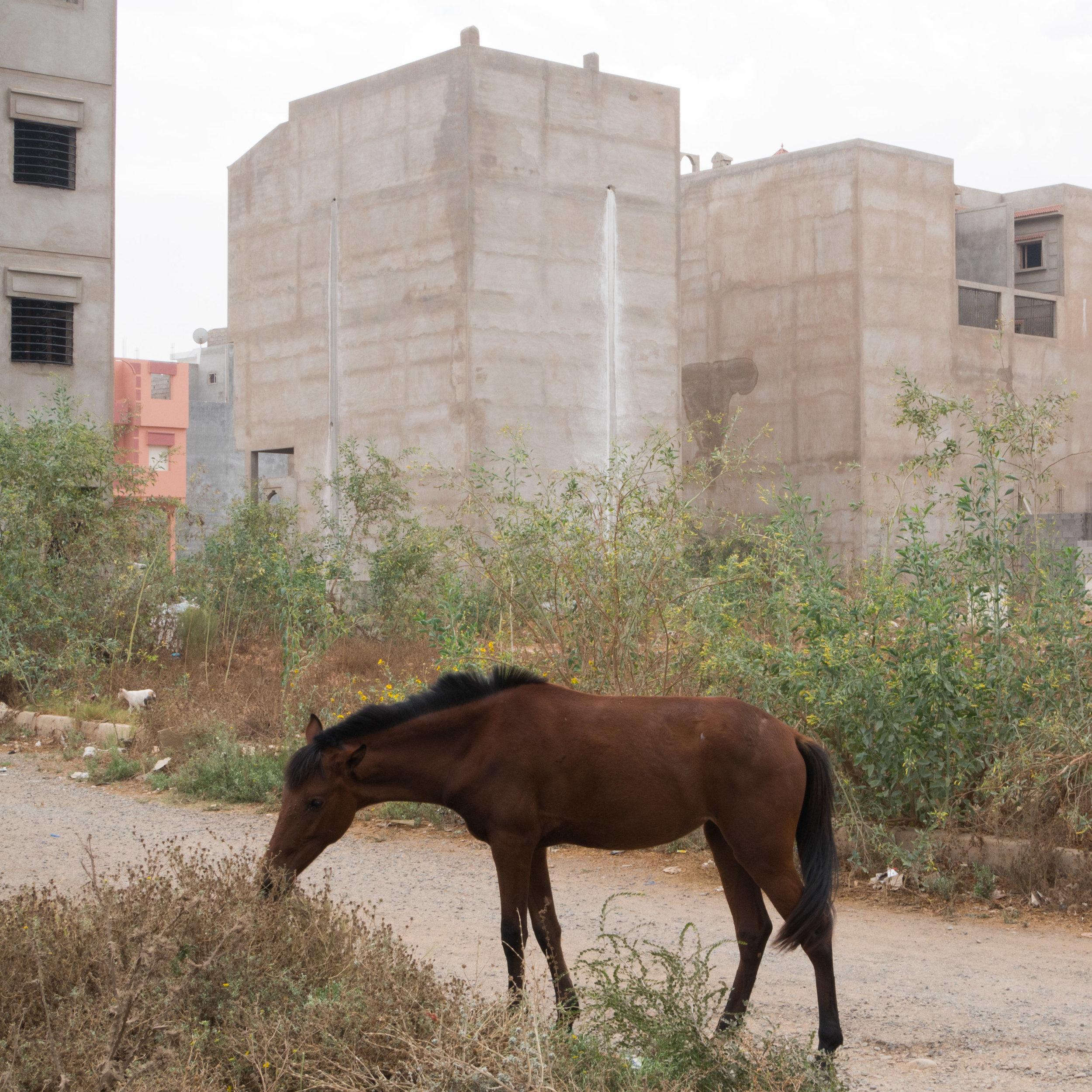 Maroc Habitat Christoph Montebelli-4.jpg