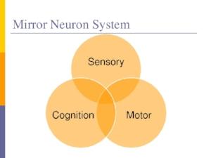 mirror-neurons-13-728.jpg