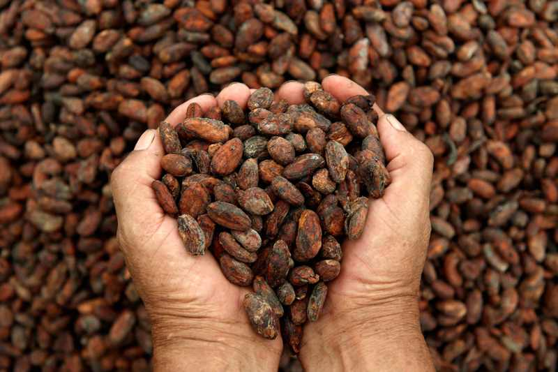 Ceremonial Cacao - Fair-trade Sourced in Collaboration with the Aroma Ecuador