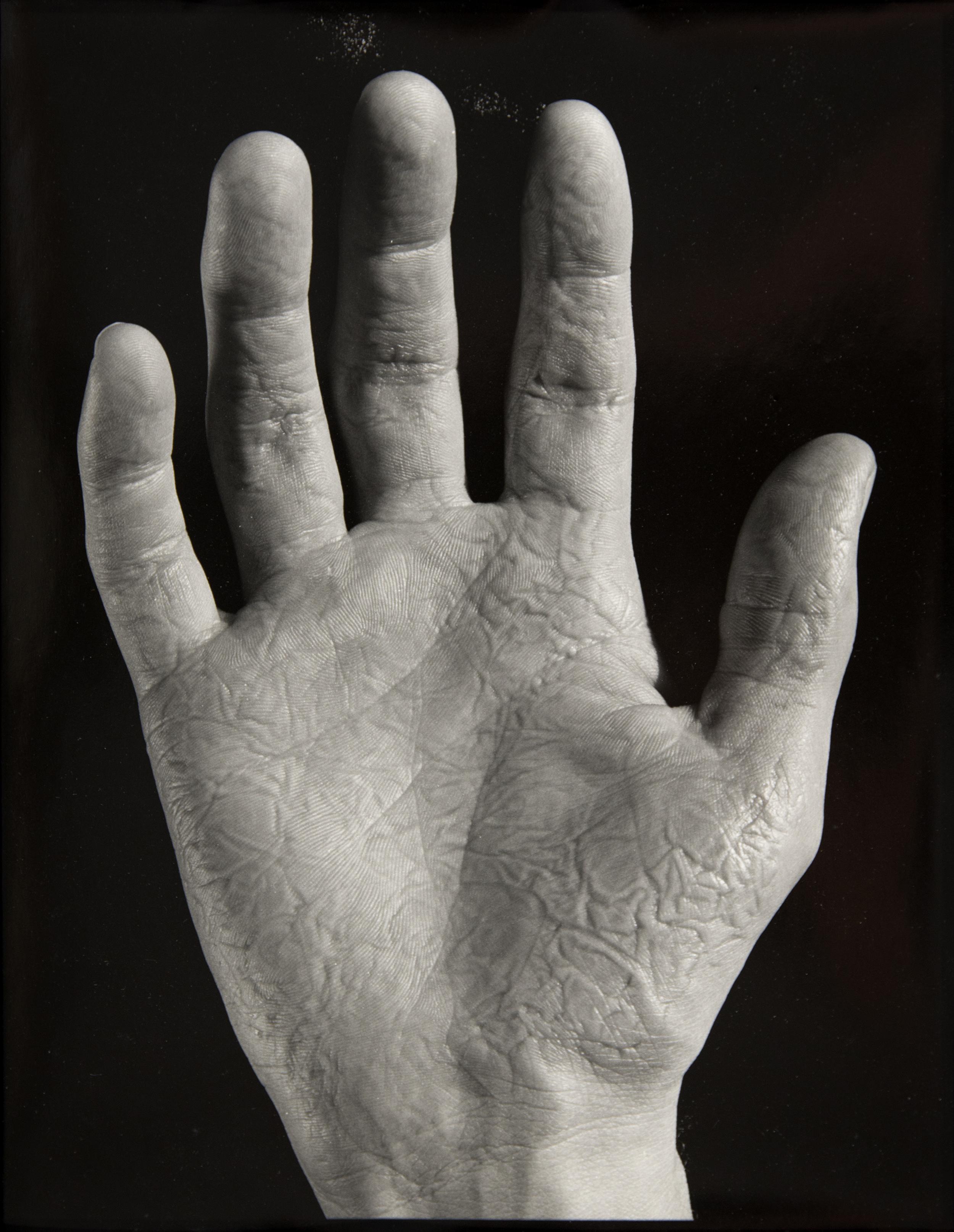 03-Palm.jpg